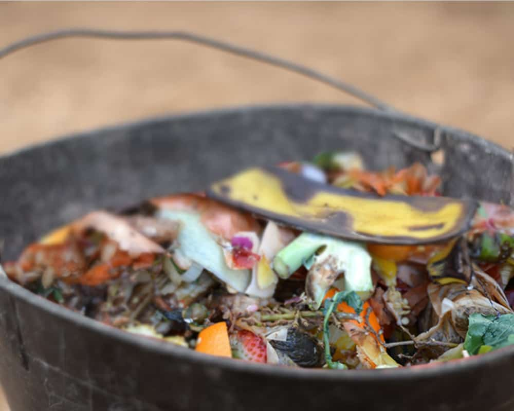 food compost in a bucket