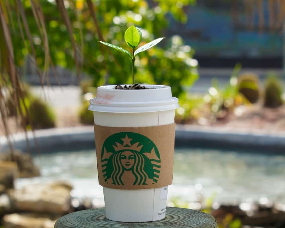 plant in a starbucks cup