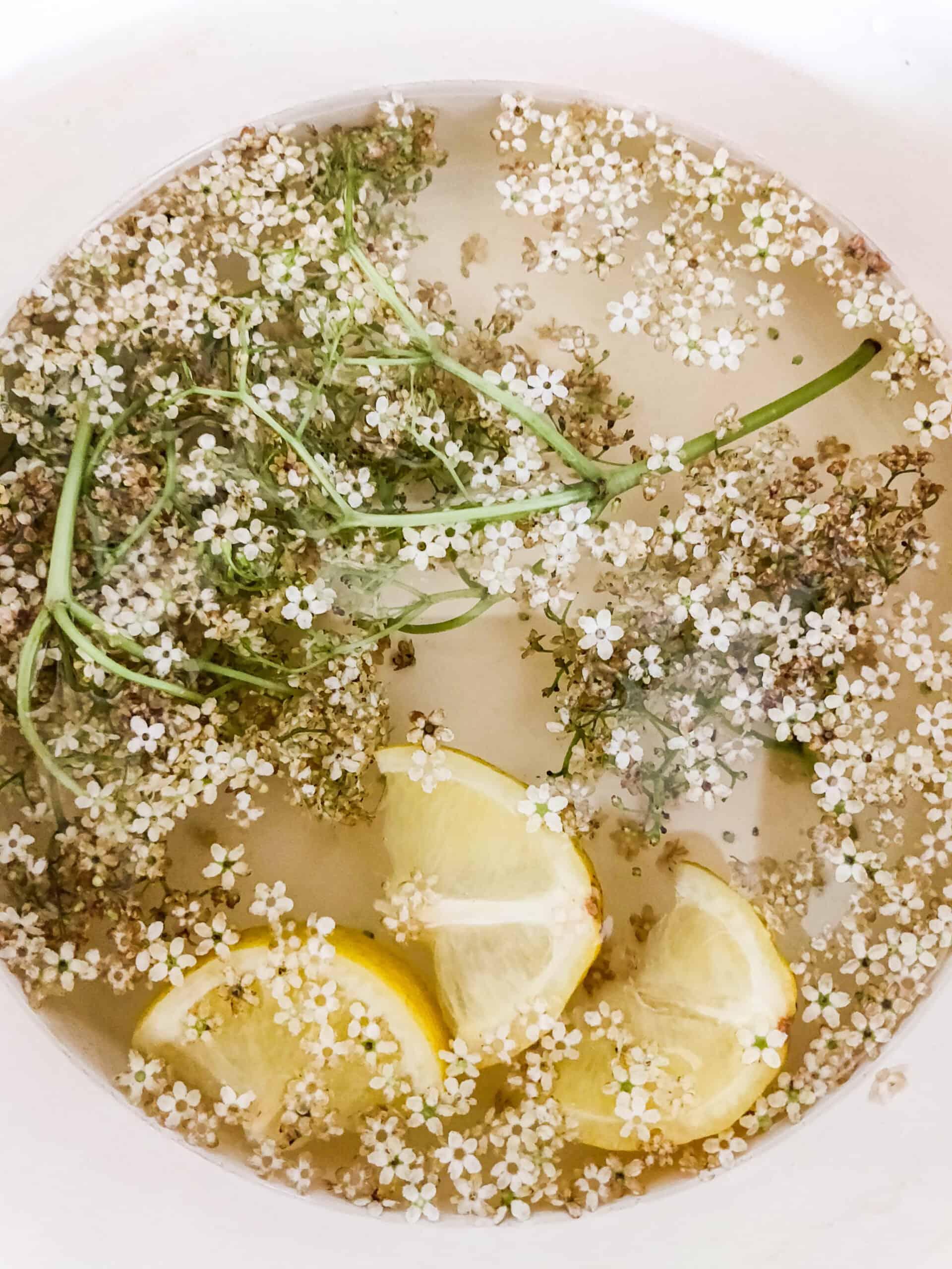 elderflower lemonade infusion